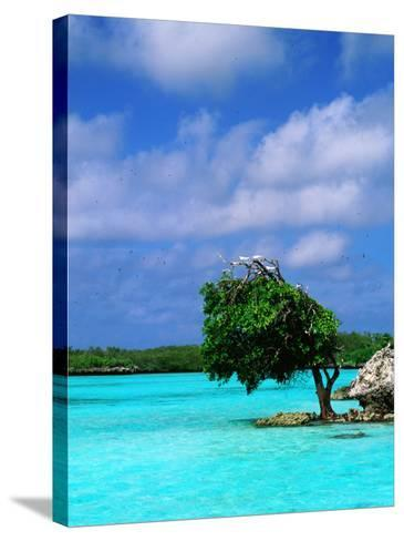 Bird on Treetop in Central Lagoon-Ralph Hopkins-Stretched Canvas Print