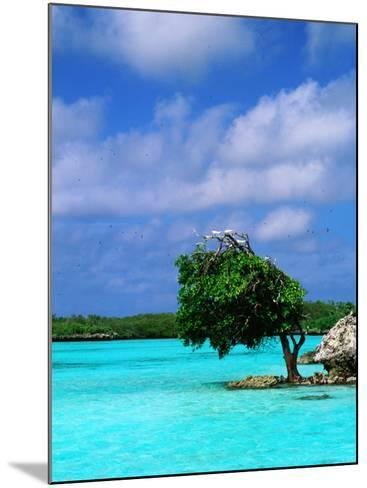 Bird on Treetop in Central Lagoon-Ralph Hopkins-Mounted Photographic Print