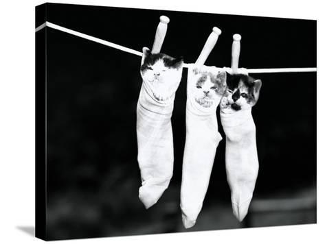 Three Kittens in Socks-H^ Armstrong Roberts-Stretched Canvas Print