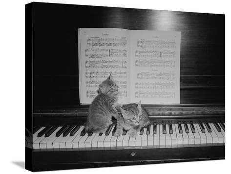 Two Kittens Sitting on Piano Keyboard By Sheet Music-George Marks-Stretched Canvas Print