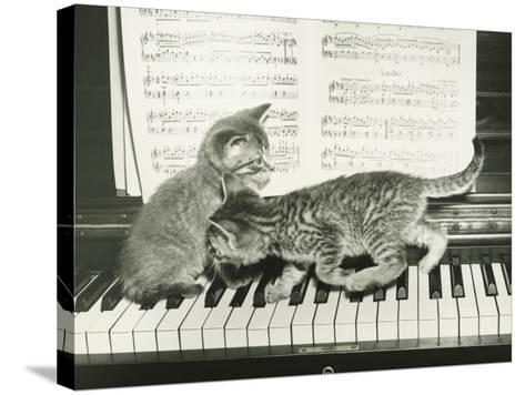 Two Kitten Playing on Piano Keyboard-George Marks-Stretched Canvas Print