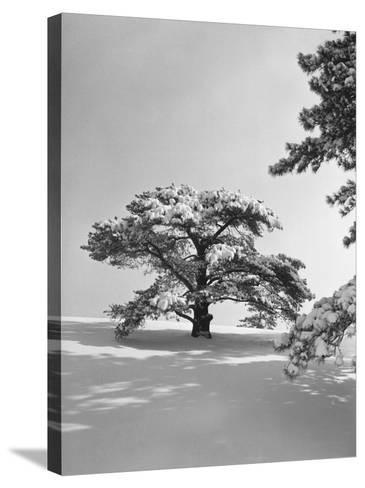 Winter Landscape-George Marks-Stretched Canvas Print