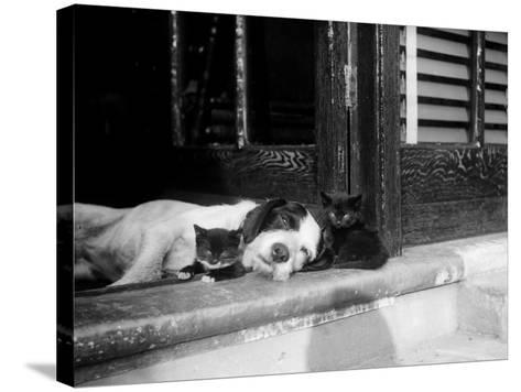 Best of Friends--Stretched Canvas Print