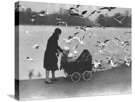 Feed the Birds--Stretched Canvas Print