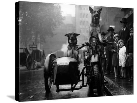 Daredevil Dogs--Stretched Canvas Print