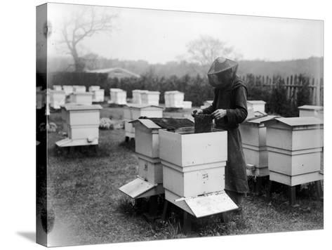Beekeeping--Stretched Canvas Print