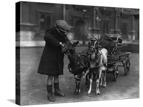 Goat Cart--Stretched Canvas Print