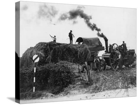 Making Hay--Stretched Canvas Print