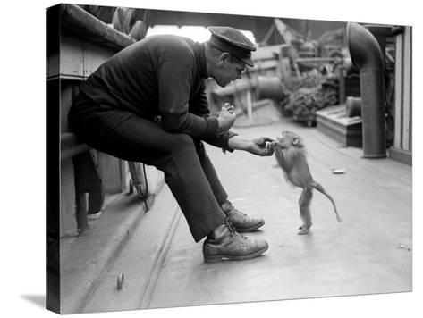Pet Monkey--Stretched Canvas Print