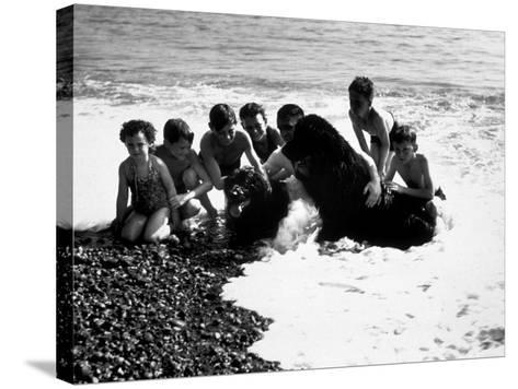 Sea Dogs--Stretched Canvas Print