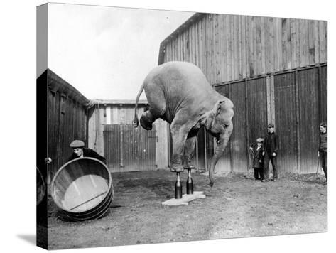 Circus Elephant--Stretched Canvas Print
