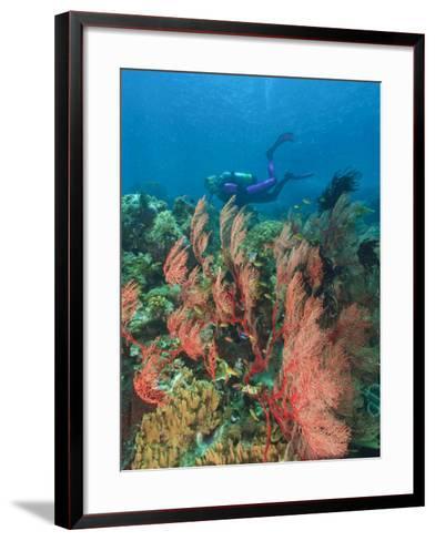 Scuba Diver and Sea Fans, Raja Ampat, Papua-Stuart Westmorland-Framed Art Print