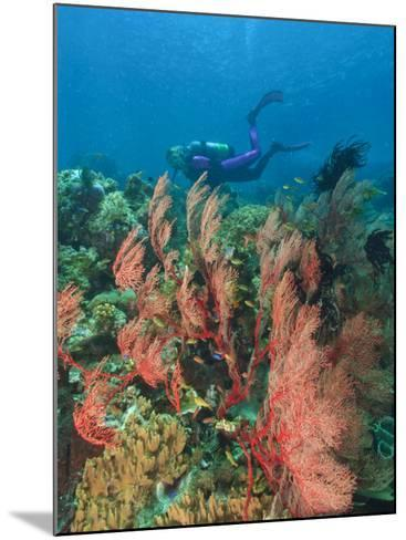 Scuba Diver and Sea Fans, Raja Ampat, Papua-Stuart Westmorland-Mounted Photographic Print