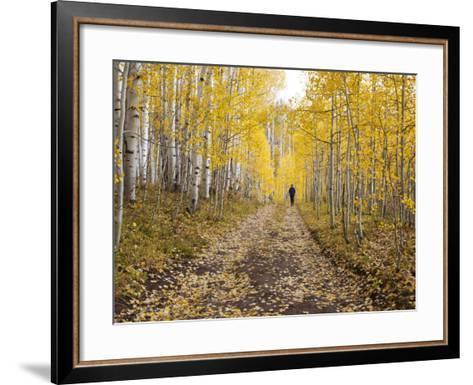 Gunnison National Forest, Colorado, USA-Jamie & Judy Wild-Framed Art Print