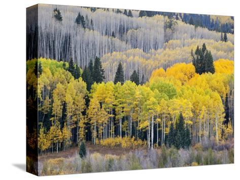 Gunnison National Forest, Colorado, USA-Jamie & Judy Wild-Stretched Canvas Print
