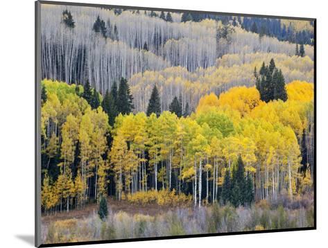 Gunnison National Forest, Colorado, USA-Jamie & Judy Wild-Mounted Photographic Print