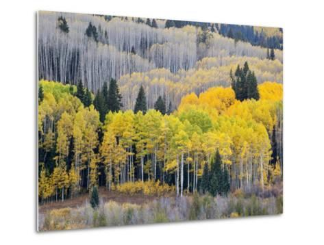 Gunnison National Forest, Colorado, USA-Jamie & Judy Wild-Metal Print