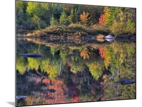 Shoreline Reflection, Lily Pond, White Mountain National Forest, New Hampshire, USA-Adam Jones-Mounted Photographic Print