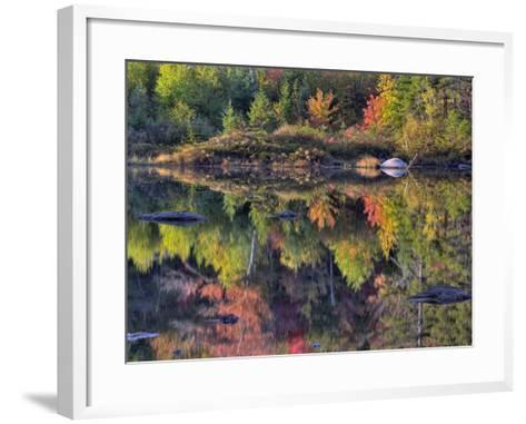 Shoreline Reflection, Lily Pond, White Mountain National Forest, New Hampshire, USA-Adam Jones-Framed Art Print