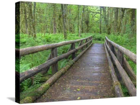 Maple Glade Trail Wooden Bridge, Quinault Rain Forest, Olympic National Park, Washington, USA-Jamie & Judy Wild-Stretched Canvas Print