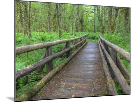 Maple Glade Trail Wooden Bridge, Quinault Rain Forest, Olympic National Park, Washington, USA-Jamie & Judy Wild-Mounted Photographic Print