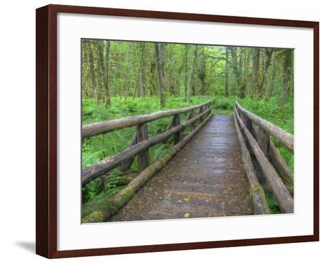 Maple Glade Trail Wooden Bridge, Quinault Rain Forest, Olympic National Park, Washington, USA-Jamie & Judy Wild-Framed Art Print