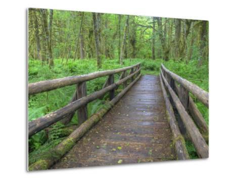 Maple Glade Trail Wooden Bridge, Quinault Rain Forest, Olympic National Park, Washington, USA-Jamie & Judy Wild-Metal Print