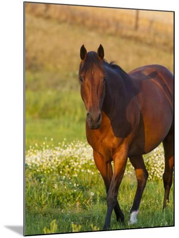 Horse in Pasture Near Pullman, Washington, USA-Chuck Haney-Mounted Photographic Print