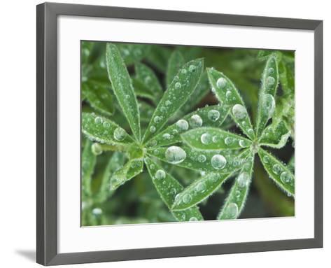 Dew Drops on Leaves-Rob Tilley-Framed Art Print