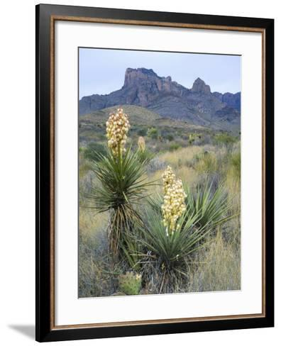 Spanish Dagger in Blossom Below Crown Mountain, Chihuahuan Desert, Big Bend National Park, Texas-Scott T^ Smith-Framed Art Print