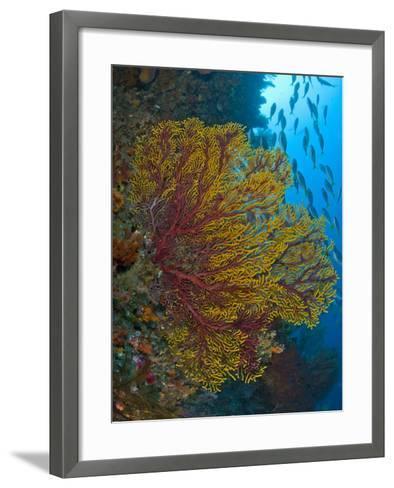 Colorful Sea Fan Or Gorgonian Coral, Raja Ampat, Indonesia--Framed Art Print