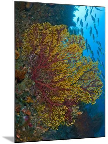 Colorful Sea Fan Or Gorgonian Coral, Raja Ampat, Indonesia--Mounted Photographic Print