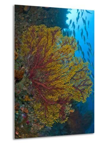 Colorful Sea Fan Or Gorgonian Coral, Raja Ampat, Indonesia--Metal Print