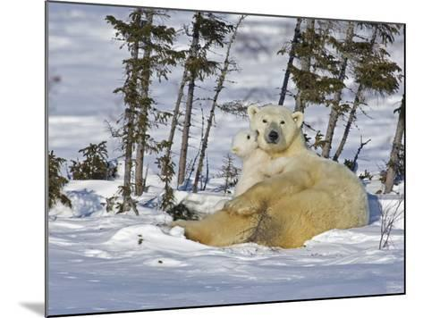 Polar Bear Cub Playing With a Watchful Mother, Wapusk National Park, Manitoba, Canada-Cathy & Gordon Illg-Mounted Photographic Print