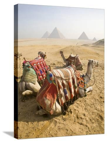 Resting Camels Gaze Across the Desert Sands of Giza, Cairo, Egypt-Dave Bartruff-Stretched Canvas Print