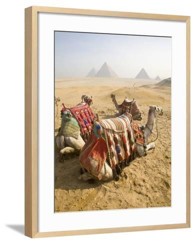 Resting Camels Gaze Across the Desert Sands of Giza, Cairo, Egypt-Dave Bartruff-Framed Art Print