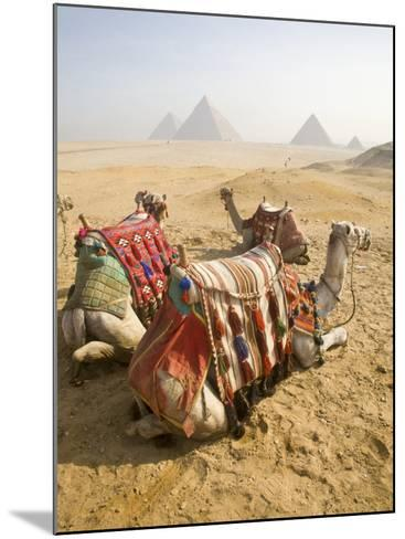 Resting Camels Gaze Across the Desert Sands of Giza, Cairo, Egypt-Dave Bartruff-Mounted Photographic Print