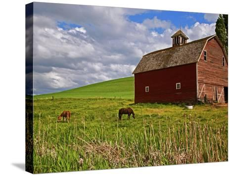 A Ride Through the Farm Country of Palouse, Washington State, USA-Joe Restuccia III-Stretched Canvas Print