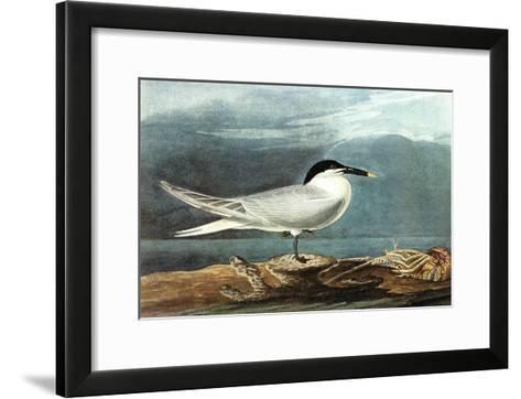 American Coot-John James Audubon-Framed Art Print