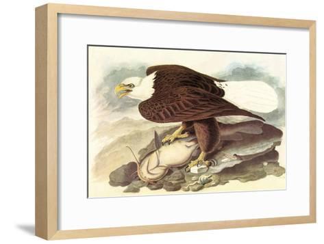Bald Eagle 2-John James Audubon-Framed Art Print