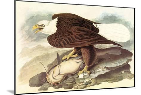 Bald Eagle 2-John James Audubon-Mounted Art Print