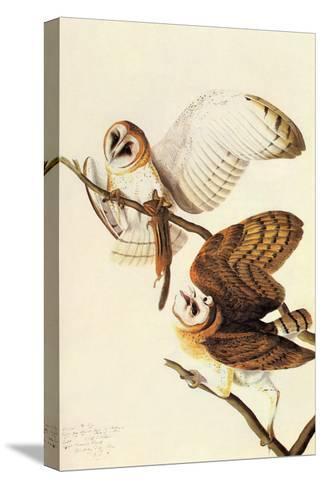 Barn Owl-John James Audubon-Stretched Canvas Print
