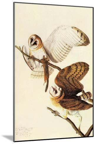 Barn Owl-John James Audubon-Mounted Art Print