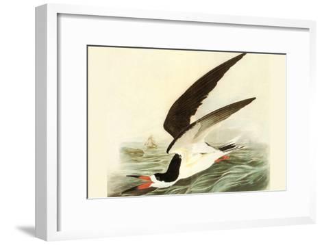 Black Skimmer-John James Audubon-Framed Art Print