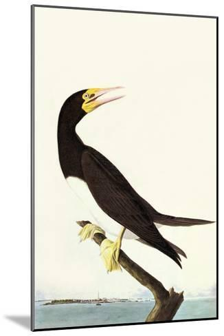 Brown Booby-John James Audubon-Mounted Art Print