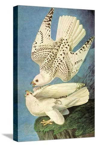 Falcons-John James Audubon-Stretched Canvas Print