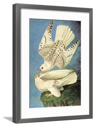 Falcons-John James Audubon-Framed Art Print