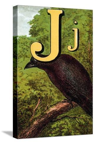 J For the Jackdaw, Perky And Bold-Edmund Evans-Stretched Canvas Print