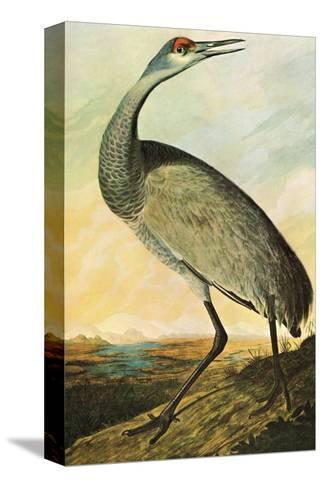 Sandhill Crane-John James Audubon-Stretched Canvas Print