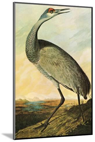 Sandhill Crane-John James Audubon-Mounted Art Print